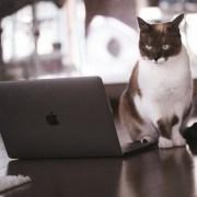 EAの取引結果に悩む猫