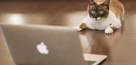 MT4の動きを眺めている猫の写真