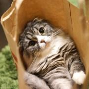 袋へ飛び込んだ猫
