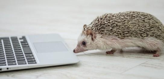 2020年はネズミ年!ねずみがパソコンでFXを?