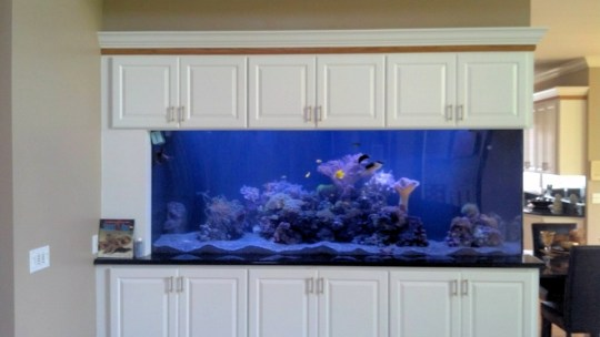 Reef Tank with Custom Cabinetry