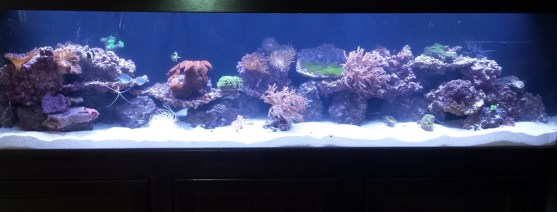 Long Reef Aquarium
