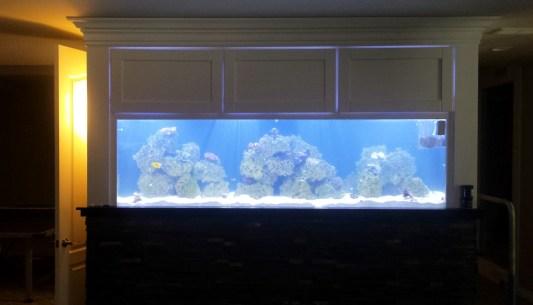 New Aqua FX Custom Designed Reef Tank