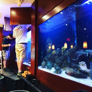 Saltwater Fish Tank Cleaning in Michigan