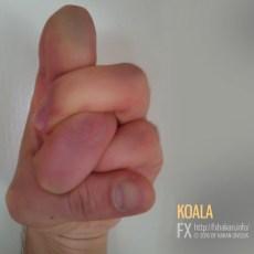 Finger - Koala