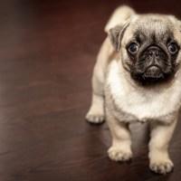 Links: Von viralen Inhalten mit Hundewelpen und Vermögensaufbau