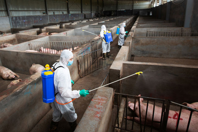 China experiences African swine fever case in piglets transported to Sichuan