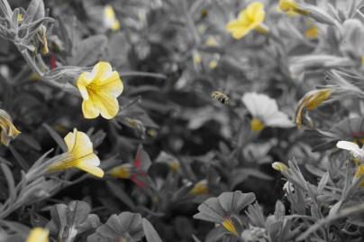 Balkonblumen mit Insekt - Farbfilter