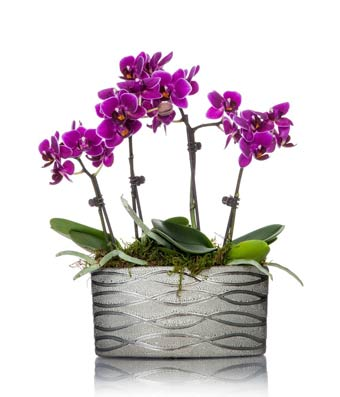 Modern Magenta Orchid Planter At From You Flowers