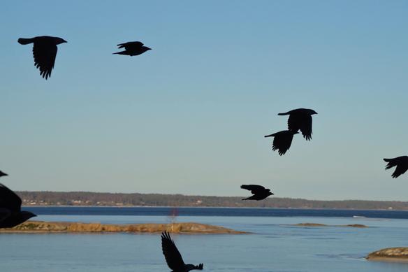 """""""Fria fina fåglar flyger"""" döper jag denna bild till. Foto Peter Ahlborg"""