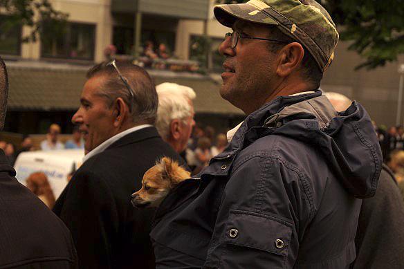 Den söta vovven för följa med på Hammarkullekarnevalen. Bättre plats kan man inte ha - innan för jackan nära husse. Foto: Peter Ahlborg