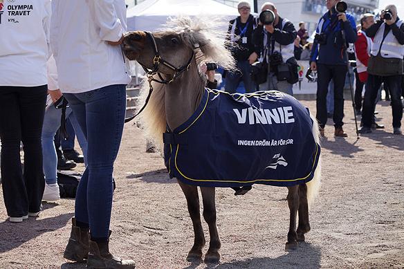 """Vinnie – travets lilla söta maskot som marknadsförs med de berömda orden """"Ingen dröm är för stor"""". Men, det är Vinnies inställning till livet. Foto: Peter Ahlborg"""