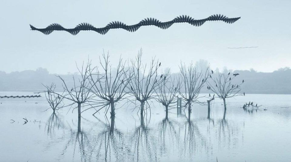 Steady, wavy lines mark the passage of flying birds