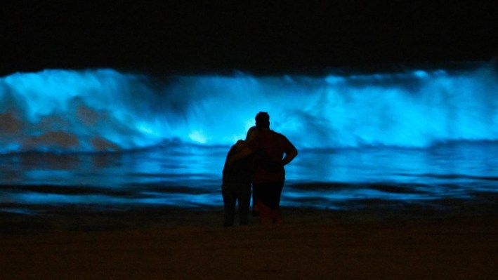 Beachgoers admire the bioluminescent waves crashing on a CA beach.