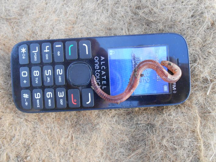 An earthworm atop an old mobile phone.