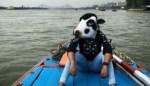 Ινδές με μάσκες αγελάδας: Ασφαλέστερο να είσαι ζώο αντί γυναίκα;