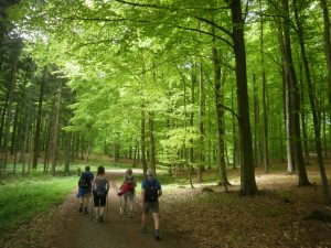 Pilgrimsvandring i fynsk skov