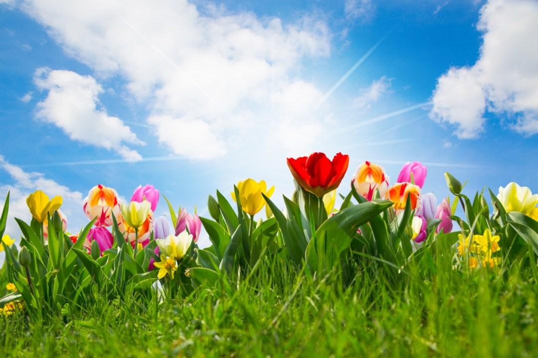 Fit Het Voorjaar In