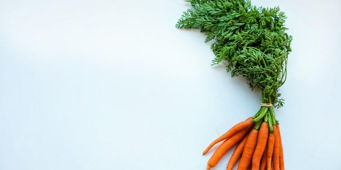 Garden of Serenity: Don't Buy Your Food, Grow It