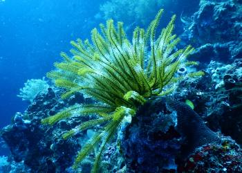 Coral Vita Wants to Save Coral Reefs