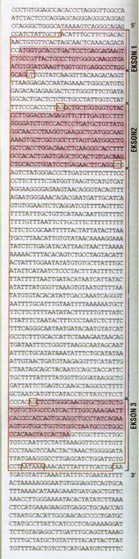 beta globin, genome, genom, genetik şifre, molekül