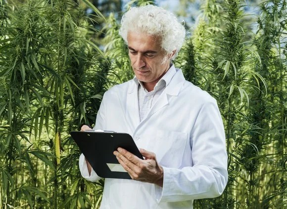 A lab researcher in a coat making notes in a cannabis grow field.