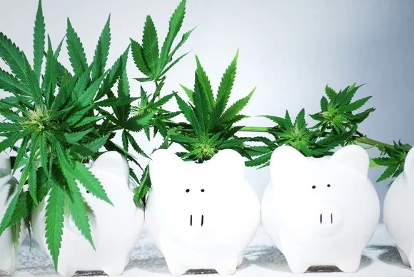 Cannabis plants of descending size growing out of lined up piggy banks.