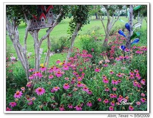 【花花世界】Shimek Gardens 賞花花(3) - 在水一方~Loop38 New Music樂團 - udn部落格