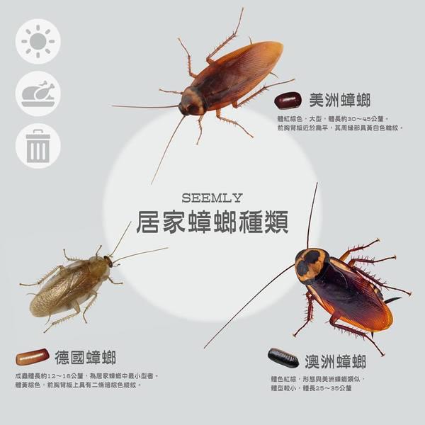 居家蟑螂種類 - 白蟻跳蚤蟑螂危機~就交給蟲蟲達人來幫您搞定! - udn部落格