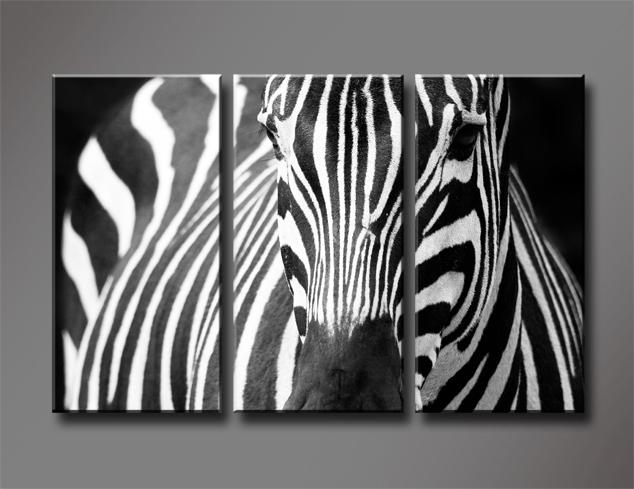 Black And White Zebra, 3 Panels/Set HD Canvas Print