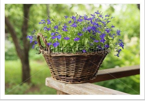 free shipping! vintage natural willow flower pots basket ...
