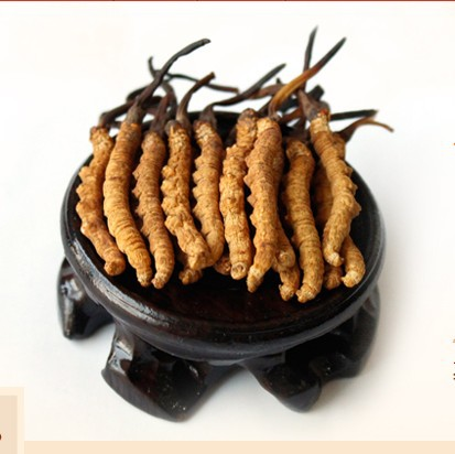 Image result for cordyceps tea