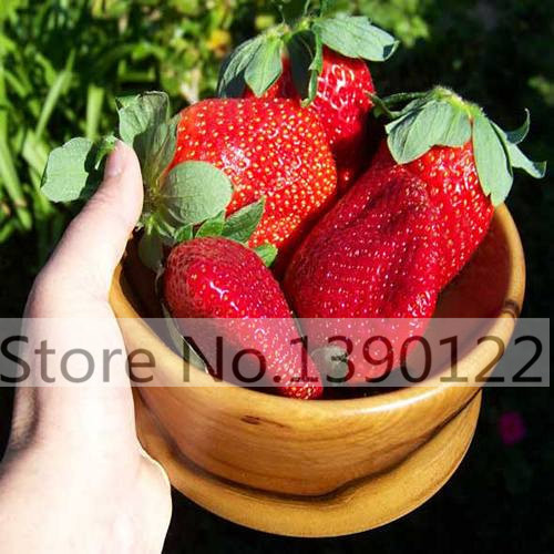 100pcs/bag Potted banana seeds bonsai Organic fruit seeds Healthy and nutritious food fruits dwarf banana plant for home garden