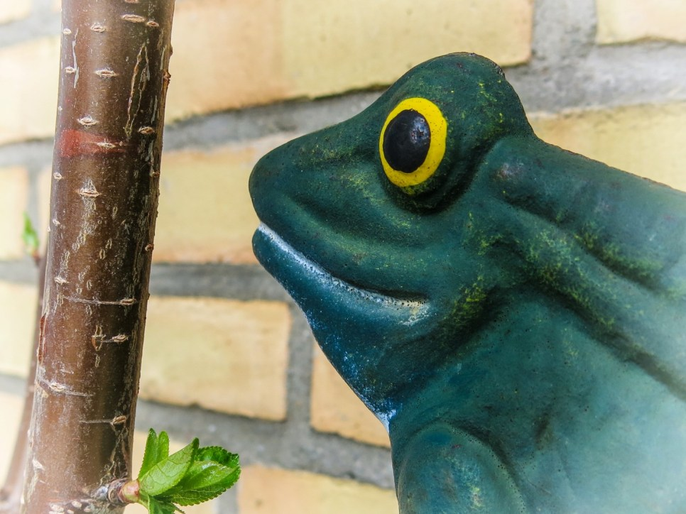 IMG_0302-Frosch-Lr4 (Large)