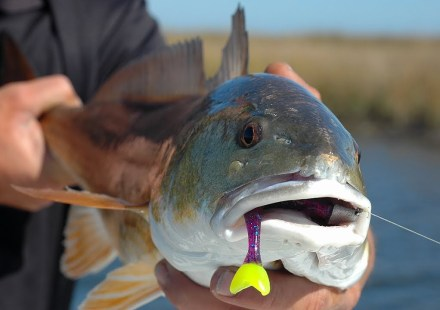 Four Seasons of Reelfoot Lake with Billy Blakley - G3 Sportsman