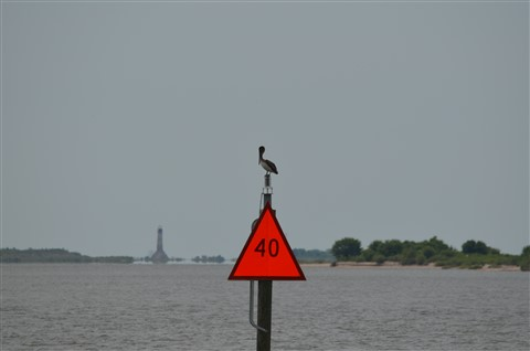 pelican on a channel marker: Kevin Arceneaux: Galleries ...