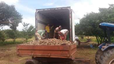 Foto de Flávio Dino entrega Casas de Farinha e Ambev compra a produção de mandioca