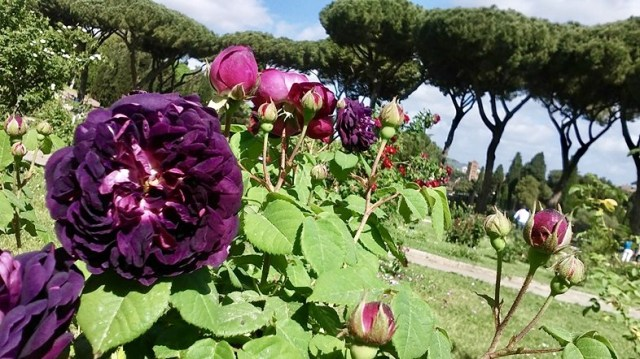 rome Italy travel photo budget travel tips non touristy things to do aventine hill rose garden