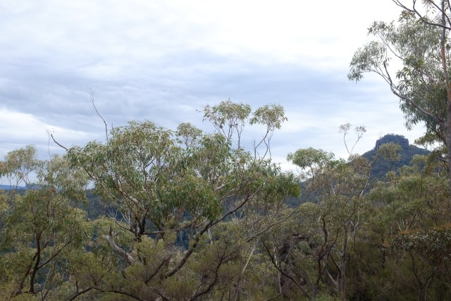 pigeon house hiking, new South Wales, travel in Australia