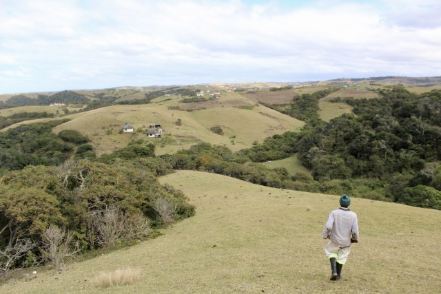 the wild coast of south africa transkei forest