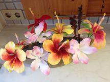 Orchideen33
