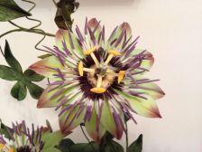 Blumen_Kuchenmesse_0031