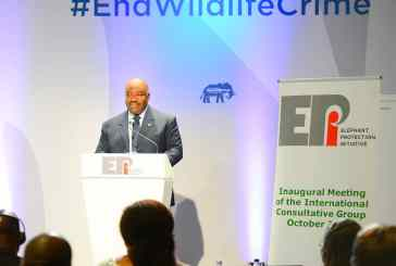 Protection des éléphants : Ali Bongo attire l'attention des pénalistes sur l'aspect sécuritaire