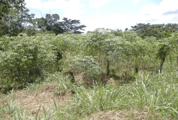 Gedd'Afrik Gabon met en vente 200 parcelles au profit des Gabonais à Ntoum