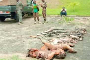 Importante saisie de viandes et d'armes de chasse la veille de Noël dans le Haut-Ogooué