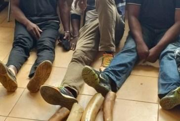 Un enseignant, un agent de santé et un pêcheur épinglés dans un motel avec des défenses d'éléphants