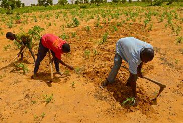 Un accord de 128,8 millions de dollars protéger l'environnement au Niger