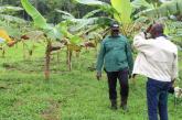 Hervé Patrick Opiangah se lance dans l'agropastorale pour contribuer à l'autosuffisance alimentaire