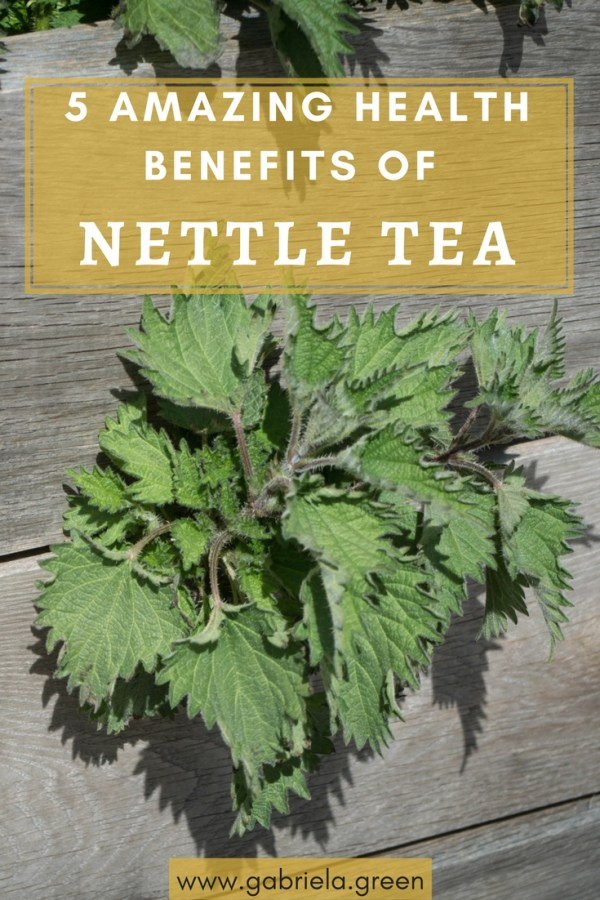 5 Amazing Benefits Of Nettle Tea - Gabriela Green - www.gabriela.green