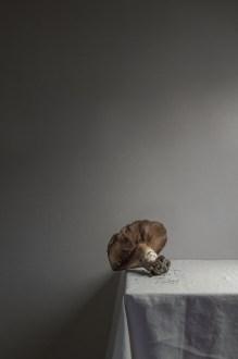 gabriela fine art photography| still life-37
